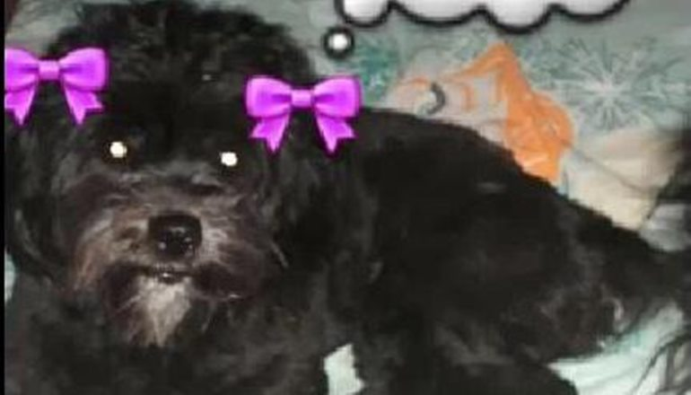 Em busca de Fanny: cadelinha desaparece em sítio próximo a Teixeira de Freitas; ajude!